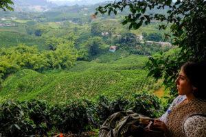 コーヒー農園の女性